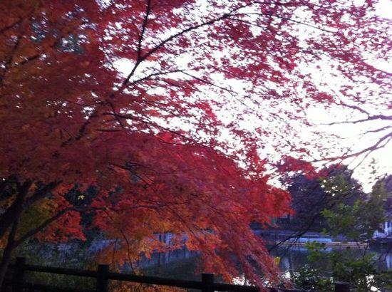 2011紅葉2.jpg
