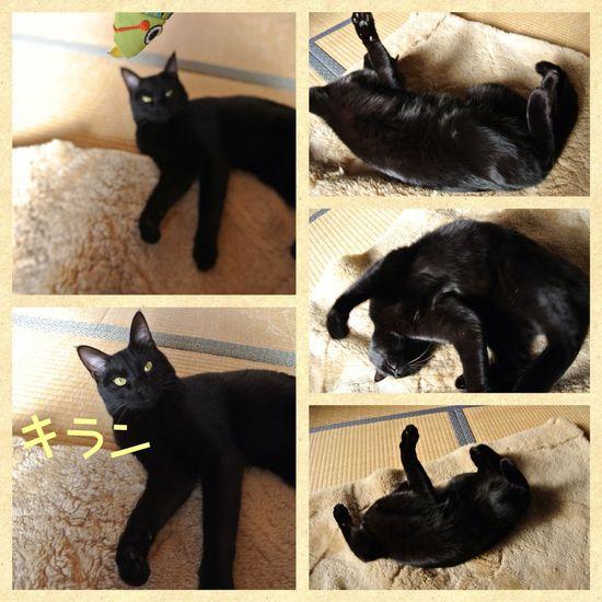 猫踊り.jpg