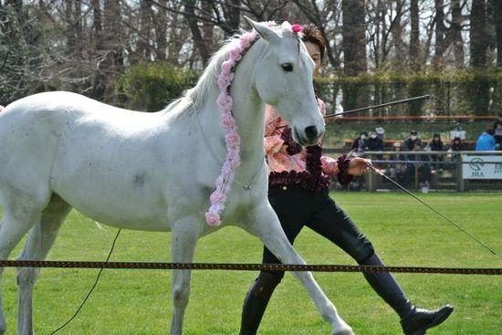 Freedom horse show.jpg
