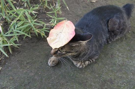 猫wLeaf.jpg