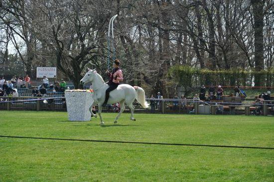 Freedom horse show 2.jpg